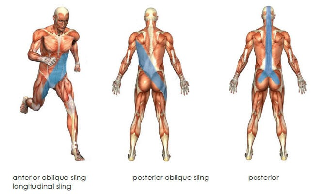 Anatomy Angel: Crawling – Dr. Dooley Noted